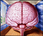 Schizophrenia Art - Artwork Of Human Brain Enclosed In Dream-like Room by John Bavosi