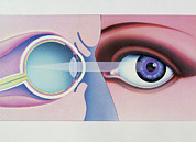 Eyesight Posters - Artwork Of Human Eye In Front View And In Section Poster by Hans-ulrich Osterwalder