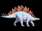 Stegosaurus Prints - Artwork Of Stegosaurus Dinosaur, Stegosaurus Sp. Print by Joe Tucciarone