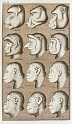 Nature Study Photo Posters - Artwork Of Twelve Catarrhines, 1870 Poster by Mehau Kulyk