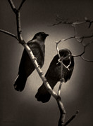 Spooky Card Mixed Media Posters - As The Crows Fly Poster by Debra     Vatalaro