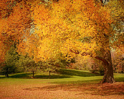 Autumn Tree Color Art - As The Leaves Fall by Kim Hojnacki