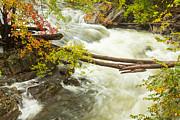 As The River Flows Print by Karol  Livote