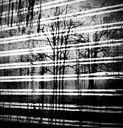 As The Swamp Sleeps Print by Jerry Cordeiro