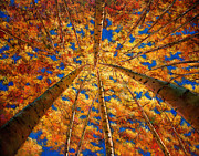 Autumn Trees Painting Posters - Ascension Poster by Johnathan Harris