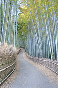 Bamboo Fence Prints - Asia Japan Kyoto Arashiyama Sagano Print by Rob Tilley