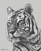 Asian Tiger Framed Prints - Asian Tiger 2 Framed Print by Larry Linton