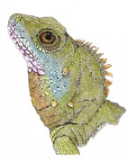 Asian Artist Drawings - Asian Water Dragon by Richard Brooks