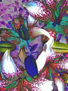 Abstracted Digital Art Framed Prints - Asiatic Lilies Abstraction  Framed Print by Beth Akerman