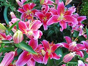 Day Lilly Photos - Asiatic Lillies by Randall Weidner