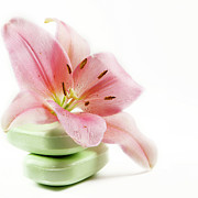 Y120907 Art - Asiatic Lily And Soaps by Marlene Ford