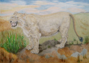 Habitat Drawings Posters - Asiatic Lioness Poster by Yvonne Johnstone
