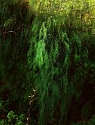 Asparagus Digital Art - Asparagus Jungle by RC DeWinter