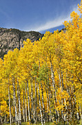 Aspen 7 Print by Marty Koch
