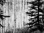 Allan Mcconnell Metal Prints - Aspen Afternoon Metal Print by Allan McConnell