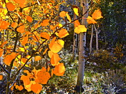 Aspen Fall Colors Photos - Aspen at Cottonwood Creek by Tina Slee