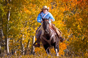 Wyoming Paintings - Aspen Conquest by Janet Fikar