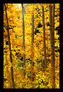 Aspen Family Print by Susanne Still