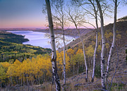 Bridger Teton Framed Prints - Aspen Forest Overlooking Fremont Lake Framed Print by Tim Fitzharris