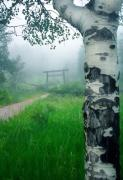 Shinto Photo Posters - Aspen Gate Mist Poster by Karl Manteuffel