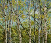 Aspen Trees Pastels Prints - Aspen Glow Print by Mary Benke