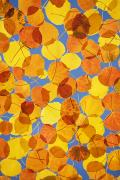 Fallen Leaf Photos - Aspen Impressions by Ron Dahlquist - Printscapes