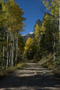 Aspen Prints - Aspen Lane Print by Jerry McElroy