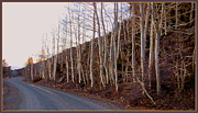Coppers Metal Prints - Aspen Lane Metal Print by Lani PVG   Richmond