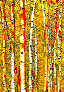 Autumn Trees Prints - Aspen Orange Print by Terril Heilman