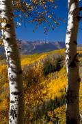 Panorama Mountain Images Prints - Aspen Outlook Print by Crystal Garner