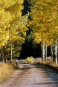 Dirt Roads Photos - Aspen Road by Gerard Fritz