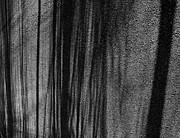 Atom Crawford - Aspen Shadows