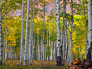 Pauls Colorado Photography Prints - Aspen Showing Print by Paul Gana