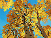 Original Fall Landscape Paintings - Aspen Sky High 2 by Gary Kim