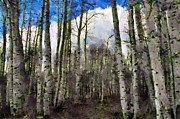 Stands Prints - Aspen Standing Print by Jeff Kolker