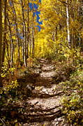 Fall Aspen Originals - Aspen Trail by Adam Pender