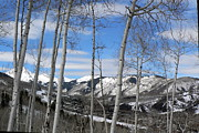 Snow Capped Originals - Aspen Trees in Snowmass by Elizabeth Fontaine-Barr