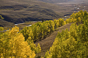 Aspen Valley Print by Timothy Johnson