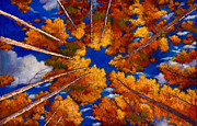 """fall Foliage"" Paintings - Aspen Vortex by Johnathan Harris"