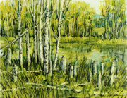 Beaver Pond Paintings - Aspens and Beaver Pond by Steve Spencer