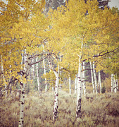 Jackson Hole Photo Framed Prints - Aspens I Framed Print by Betsy Barron