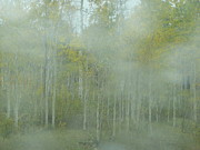 Outlook Photos - Aspens in Mist by Angela Hansen