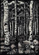 Wyoming Drawings - Aspens in Mountain Forest by Dawn Senior-Trask