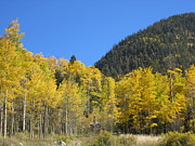Kerry  Bennett - Aspens in New Mexico