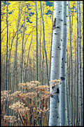 Independance Framed Prints - Aspens Independance Pass Framed Print by John McEvoy