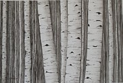 Laurel Thomson Prints - Aspens No. 1 Print by Laurel Thomson
