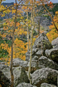 Rocky Mountain National Park Posters Posters - Aspens Rocks and Longs Peak Poster by Brent Parks