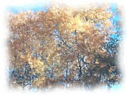 Aspen Trees Pastels Prints - Aspens Two Print by From Gods Porch Photography
