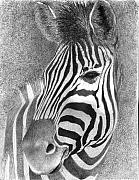 Stripe Drawings Originals - Assiduous by Phyllis Howard