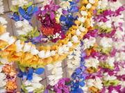 Arrange Posters - Assorted Hawaiian Leis Poster by Ron Dahlquist - Printscapes
